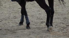 Zoccoli del cavallo che passano un campo sabbioso video di movimento lento archivi video