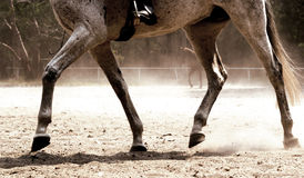 Zoccoli e polvere Fotografie Stock