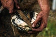 Zoccolo dei cavalli che è preparato per calzare Fotografie Stock