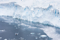 Zodiac next to a glacier. Antartica - circa December 2008 - antarctic tourism - people travel in zodiacs to view the face of a glacier Royalty Free Stock Photo