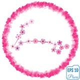 Zodiac sign Pisces. Sakura concept. Flowers concept. Constellati Royalty Free Stock Images