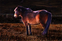 He Zodiac Year of the horse Stock Images
