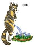 Zodiacal tekens Stock Foto's