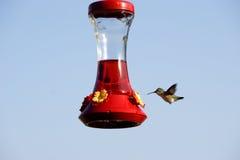 Zoemende vogel Royalty-vrije Stock Fotografie