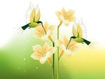 Zoemende vogel en bloemen Stock Fotografie