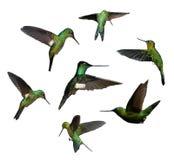 Zoemende vogels stock afbeelding
