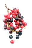Zoet en zuur geroepen fruit Royalty-vrije Stock Foto's
