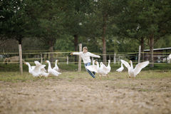 Zoet gelukkig meisje die na een troep van ganzen op landbouwbedrijf zijn wapens in werking stellen aan de kant en het glimlachen  stock foto