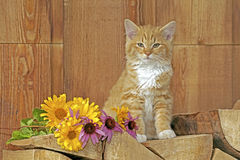 Zoet gestreepte katkatje Stock Foto