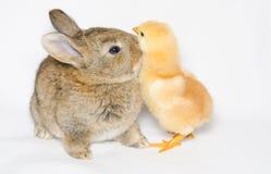 Zoet kuiken en konijntje stock afbeeldingen