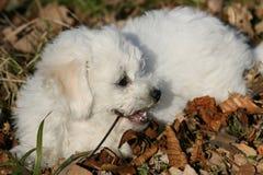 Zoet puppy Royalty-vrije Stock Foto's