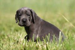 Zoet puppy! Royalty-vrije Stock Afbeeldingen