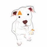 Zoet Puppy Royalty-vrije Stock Fotografie
