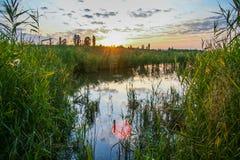 Zoet water in de steppe Stock Afbeeldingen