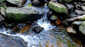 Zoet water in rivier stock footage