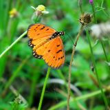 Zoete bloem en vlinder Royalty-vrije Stock Foto