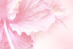 Zoete bloemen zachte stijl voor achtergrond Royalty-vrije Stock Afbeelding