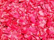Zoete de jamachtergrond van rozenbloemblaadjes Royalty-vrije Stock Afbeeldingen