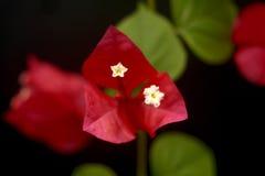 Zoete de lentebloem Stock Fotografie