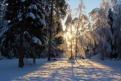 Zoete de winterdag Stock Afbeelding