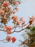 Zoete en mooie bloem Stock Foto