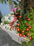 Zoete flowerbox Royalty-vrije Stock Afbeeldingen