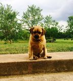 Zoete hond Royalty-vrije Stock Afbeeldingen