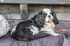 Zoete hond die op een deken liggen royalty-vrije stock afbeelding