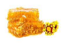 Zoete honingraat en bloemen Stock Fotografie
