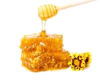 Zoete honingraat met stok en bloemen Royalty-vrije Stock Fotografie