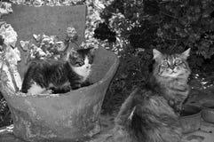 Zoete katten Royalty-vrije Stock Foto's