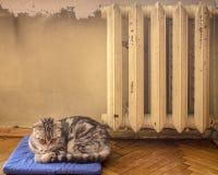 Zoete kattenslaap op een blauw hoofdkussen en verwarmd dichtbij hete batt Stock Afbeelding