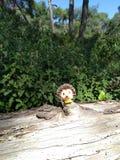 Zoete kleine egel die bij boom blijven royalty-vrije stock foto's