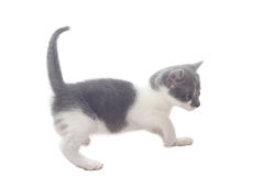 Zoete kleine Katten stock foto's