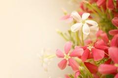 Zoete kleurenbloemen in zachte stijl op moerbeiboomdocument textuur Royalty-vrije Stock Foto