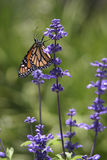 Zoete Nectar Royalty-vrije Stock Afbeelding