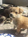 Zoete puppy royalty-vrije stock afbeelding