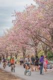 Zoete roze bloembloesem in lentetijd Stock Foto