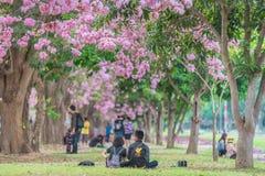 Zoete roze bloembloesem in lentetijd Stock Afbeelding