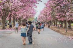 Zoete roze bloembloesem in lentetijd Stock Fotografie