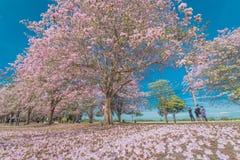 Zoete roze bloembloesem in lentetijd Stock Foto's