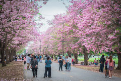 Zoete roze bloembloesem in lentetijd Royalty-vrije Stock Fotografie