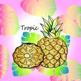 Zoete tropische fruitananas en exotische bladeren Royalty-vrije Stock Afbeelding