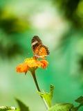 Zoete vlinder Royalty-vrije Stock Afbeeldingen