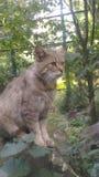 Zoete wilde kat royalty-vrije stock afbeeldingen