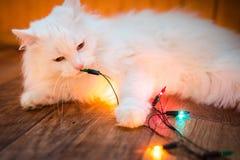 Zoete witte kat Royalty-vrije Stock Afbeeldingen