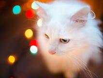 Zoete witte kat Stock Foto's