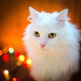 Zoete witte kat Royalty-vrije Stock Foto's