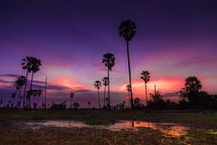 Zoete zonsondergang Stock Foto's