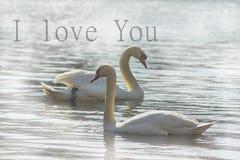 Zoete zwanen, symbolen van liefde Stock Afbeeldingen